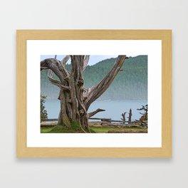JUNIPER TREE NEAR ANACORTES PACIFIC NORTHWEST Framed Art Print