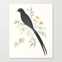 Black Winged Bird of Paradise Canvas Print