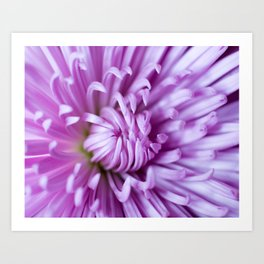 Purple Claws Art Print