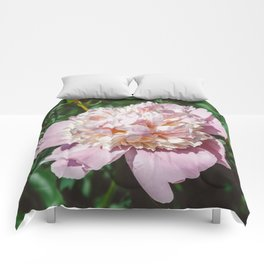 Manhattan Bloom IV Comforters