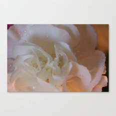 Translucent Carnation  Canvas Print