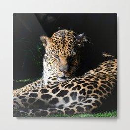 Pensive Leopard Considering Its Options Metal Print
