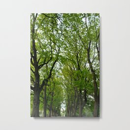 Tree Lined Walkway Photography Print Metal Print