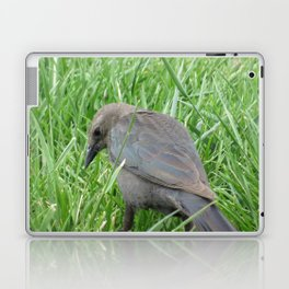 Beautful Little  Bird at Jensen NaturePark Laptop & iPad Skin