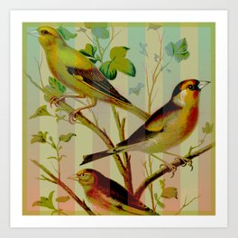 Canaries with Stripes Art Print