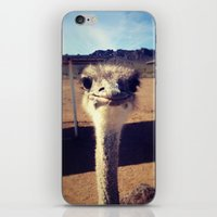 ostrich iPhone & iPod Skins featuring OSTRICH by Kaitlin Bloom