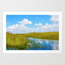 Florida Welands Art Print