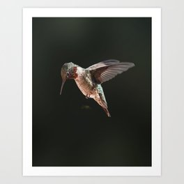 My Hummer Friend IV Art Print