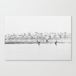 Flock of Terns and Pelicans in the Florida Bay Canvas Print