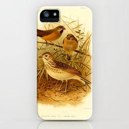 spermestes nana alauda hova iPhone Case