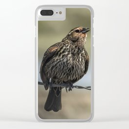 Female Red-winged Blackbird Puffed Up with Song Clear iPhone Case