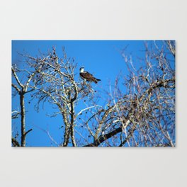Osprey Keeps Watch Canvas Print