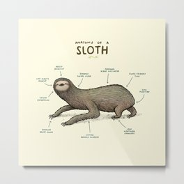 Anatomy of a Sloth Metal Print