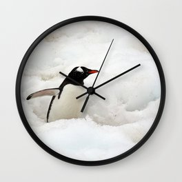 Gentoo Penguin Walking Through the Snow to the Sea Wall Clock