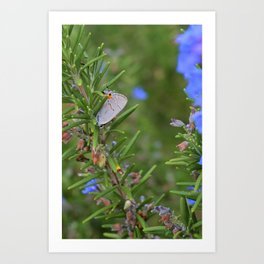 Ahh, The Sweet Smell of Rosemary Art Print