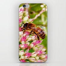 Art of Nature iPhone & iPod Skin