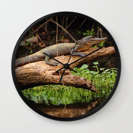 Gator in a Louisiana Swamp Wall Clock