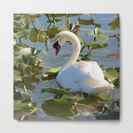 Sweet Swan Metal Print