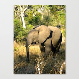 Safari Elephant Canvas Print