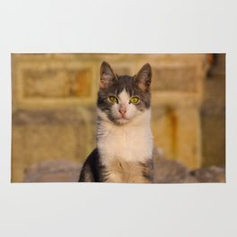 Street Cat Rug