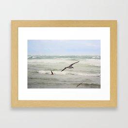 Seagulls flying over rough sea Framed Art Print