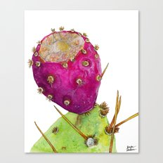 Prickly Pear Cactus Fruit Canvas Print