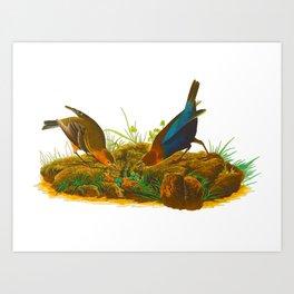 Cowbird Bird Illustration Art Print