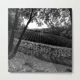 Vineyard in California Black & White Pencil Drawing Photo Metal Print