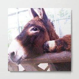 Donkeys in Colour Metal Print