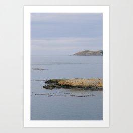 Harbor seals enjoy the San Juans Art Print