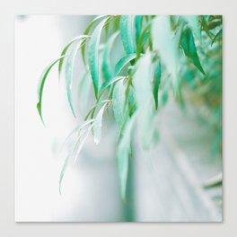 Gentle Greens (Color) Canvas Print