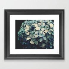 blue hydrangea Framed Art Print