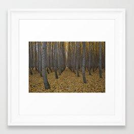 Boardman Tree Farm Framed Art Print