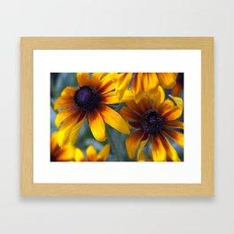Summer's things - rudbeckia 20 Framed Art Print
