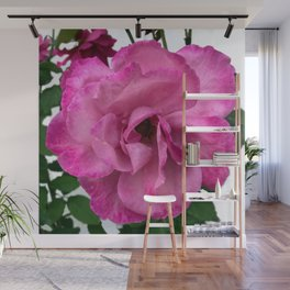 Bodacious Pink Rose | Large Pink Flower | Nature Photography Wall Mural