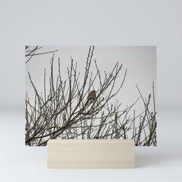 Song Sparrow Singing Mini Art Print