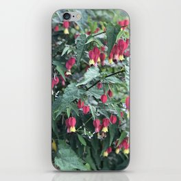 Red firecracker flower in Butchart's Garden iPhone Skin