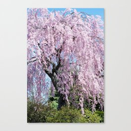 weeping cherry tree Canvas Print