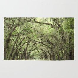 Georgia Oak Alley Rug