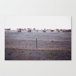 Sheep Valley Canvas Print