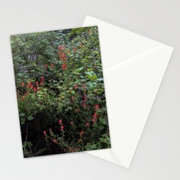 Indian Paintbrush on a Forest Trail Stationery Cards