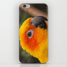 Sun conure parrot iPhone Skin