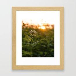 Sun-rays Framed Art Print
