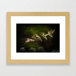 Humming Bird in Flight Framed Art Print