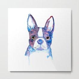 bulldog frances Metal Print