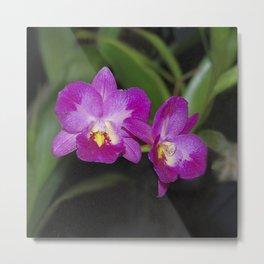 Magnificent Magenta Orchid - Ctna Capri Metal Print