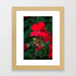 Red Blooms Framed Art Print