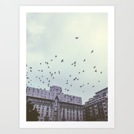Birds of the City Art Print