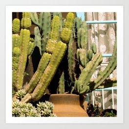 Cactus Window Art Print