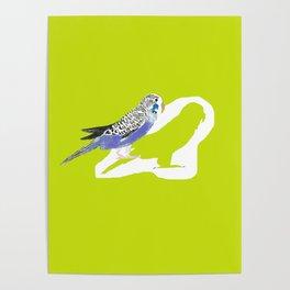 Pistachio shadow parakeet Poster
